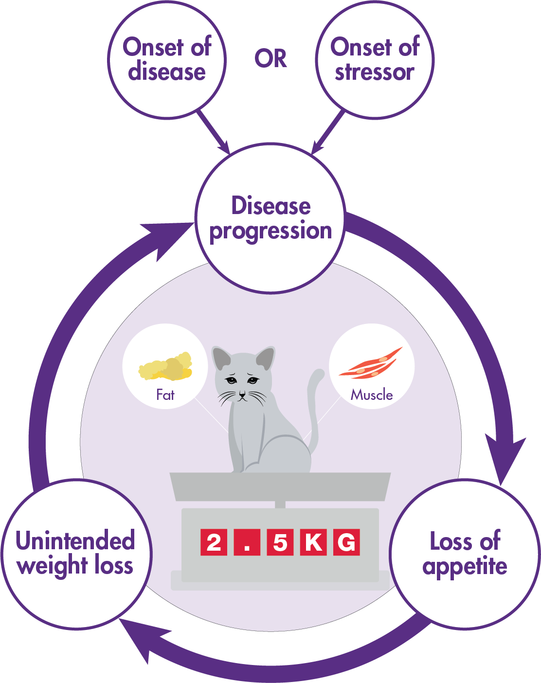 Disease progression and lack of appetite cycle in cats illustration.